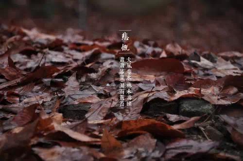 《二十四诗品》详解 - 长安若水 - 青青芳草地